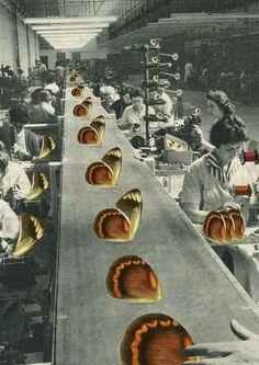 Butterfly Assembly Line by Sammy Slabbinck: Collage & illustrations, FB