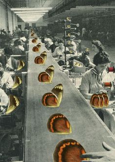 Butterfly Assembly Line by Sammy Slabbinck: Collage & illustrations, FB