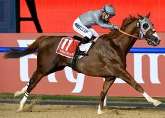 Definitely my favourite moments of 2016 ~ California Chome wins the Dubaï World Cup ! ~ #californiachrome #dubaiworldcup