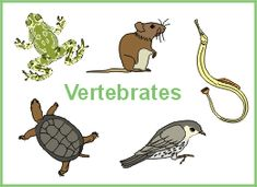 Vertebrates (C1, W6)