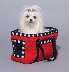 DIY Dog Hoodie, Harness, Leash, Carrier and Carrier Tote = link to purchase Mccall's pattern Diy Dog Bag, Dog Carrier Bag, Maltese Dogs, Chihuahua, Pets 3, Dog Hoodie, Pet Carriers, Diy Stuffed Animals, Dog Life