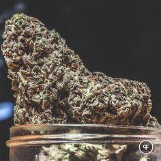 Our Buddha's Tooth goes well with these rainy Sunday vibes. The Haze in its genetics keeps you uplifted while the Kush and Blueberry create warm, fuzzy feelings on the inside. 🙌💚🌲🌧🤗 #phantomfarms #mightytastycannabis #sungrown #oregongrown #organic #cannabis #marijuana #loyaltosoil #inbend #portland #eugene #roguevalley #ommp #leafly #buddhastooth #dharmadiesel #bluedream #hybrid #raindydays #sundayvibes