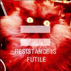 Resistant kitty