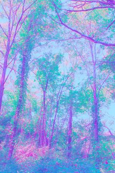Blue purple forest