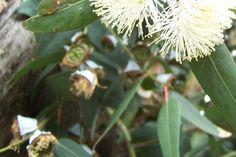 Todo con las flores: decorar, crear, degustar, cuidar...................: Una mezcla de olores y sensaciones !!!