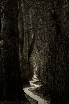 dark path into a forest