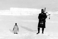 """From the Scottish National Antarctic Expedition in 1903. Expedition bagpiper wanted to """"experiment"""" by forcing a penguin to listen to his performance. The penguin was indifferent."""