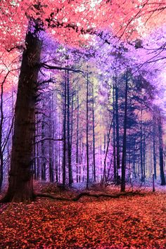 ✯ Pink Woods.. I wish the leaves turned these colors in fall..