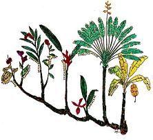 taxonomia.JPG (Imagen JPEG, 222 × 202 píxeles)