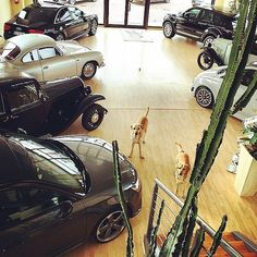 #repost #memories #fmcar #2yearsago #cars #ourshop #ourdogs #cesenatico #showroom #auto #automotive #automobile #vintage #new #luxury #awesome http://blog.fmcarsrl.com/wp-content/uploads/2017/02/16230222_979074545560050_8361596233415917568_n.jpg http://blog.fmcarsrl.com/index.php/2017/02/03/repost-memories-fmcar-2yearsago-cars-ourshop-ourdogs-cesenatico-showroom-auto-automotive-automobile-vintage-new-luxury-awesome/