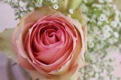 Roses are a favorite! Two toned dusty rose.