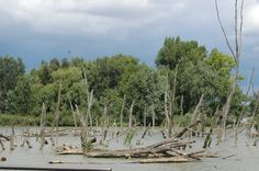 Dunaj pri Bratislave Plants, Plant, Planets