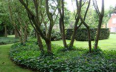 Meerstammige bomen Forest Garden, Woodland Garden, Garden Trees, Landscape Elements, Garden Landscape Design, Landscape Architecture, Side Yard Landscaping, Perennial Grasses, Natural Garden