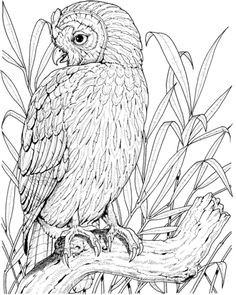 Perched Owl Coloring Page From Owls Category Select 30094 Printable Crafts Of Cartoons Nature Animals Bible And Many More