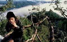 Julia Butterfly Hill vivió dos años en un árbol para evitar que lo talaran.