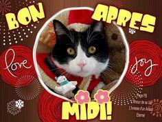 Bon après midi #bonapresmidi chat noel accessoires