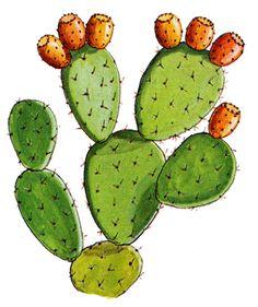 Cactus Drawing, Watercolor Cactus, Cactus Art, Watercolor And Ink, Cactus Plants, Opuntia Cactus, Prickly Pear Cactus, Kaktus Illustration, Crystal Drawing