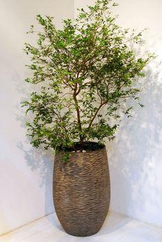 植物の持つ個性、器の持つスタイルから自分らしいFUGA GREENをご紹介。