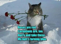 Cats can only do romance for so long :-D