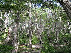 La isla Lennox es un territorio insular del sur de Chile, en el sector sudeste del archipiélago de Tierra del Fuego, en el extremo austral de América del Sur. Se sitúa sobre el mar de la Zona Austral al sur de la isla Picton, y al este de la isla Navarino. Pertenece a la comuna de Cabo de Hornos, Provincia de la Antártica Chilena, XII Región de Magallanes y de la Antártica Chilena.  El bosque de lengas domina en la parte más alta de la isla Lennox. http://es.wikipedia.org/wiki/Isla_Lennox