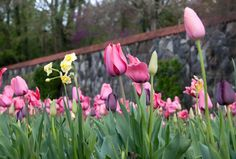 Renewal...at Easter....nature's wonderful reminder
