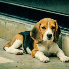 I had a pup named Marlo:). Miss him:(