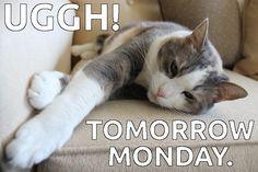 Monday again?