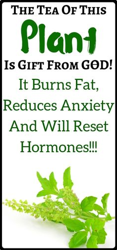 Herbal Remedies Burn Fat, Reduce Anxiety And Reset Hormones With Tulsi Tea Healthy Women, Healthy Tips, Healthy Habits, Healthy Eating, Anxiety Cure, Tulsi Tea, Understanding Anxiety, How To Treat Acne, Medicinal Plants