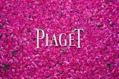 The Piaget Rose Day event in Paris 2013 A gorgeous wall of Yves Piaget roses Piaget Rose Day. First edition. #PiagetRose