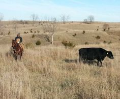 10 Year Old Bay Ranch Gelding for Sale - For more information click on image or see ad # 29939 on www.RanchWorldAds.com