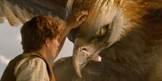 """Newt Scamander (Eddie Redmayne) encounters a Thunderbird in """"Fantastic Beasts and Where to Find Them. The Beast, Hogwarts, Harry Potter Universal, Harry Potter World, Film Fantastic, Fantastic Baby, Beast Creature, Wale, Fantastic Beasts And Where"""
