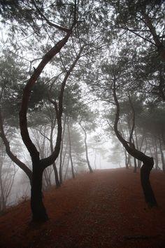 栗の木の山の松の木の散策路 - WolMyeongDong(キリスト教福音宣教会)