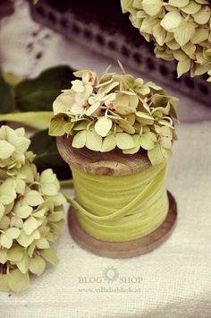 Chartreuse Green Velvet Ribbon on an Old Wooden Spool with Green Hydrangea Flowers . Hortensia Hydrangea, Green Hydrangea, Hydrangeas, Wood Spool, Flower Pots, Flowers, Brick And Stone, Velvet Ribbon, Green Velvet