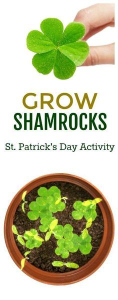 GROW LUCKY SHAMROCKS: a fun kids activity for St. Patrick's Day! #shamrocks #kidsactivities #stpatricksdayactivities