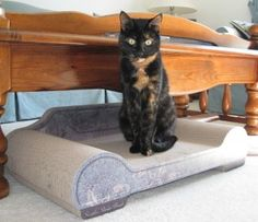Giveaway: Win a Sleeky Lounge XL from Brawny Cat