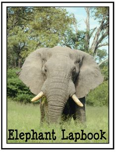 Connections ~ Africa Unit Studies, Lesson Plans, Lapbooks, Printables from Homeschool Share