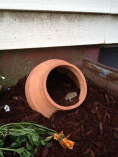 DIY toad house! Garden Junk, Lawn And Garden, Garden Art, Garden Frogs, Frog House, Toad House, Jm Barrie, Animal Habitats, Shade Garden