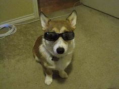 The ultimate collection of costumed Corgis on the internet. There is nothing better.