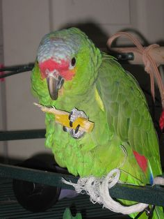 Great articles, especially about parrots needing toys to destroy!