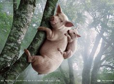 50 Animal themed Print Advertisements and print ads inspiration for you