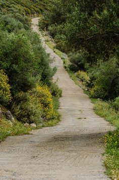 Sidewalk, Country Roads, Landscape, Sidewalks, Landscaping, Pavement, Walkways