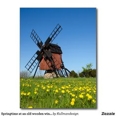 Springtime at an old wooden windmill postcard