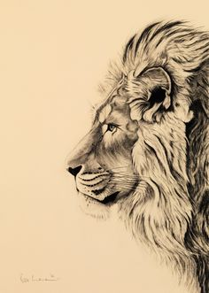 Lion tattoos hold different meanings. Lions are known to be proud and courageous. - Lion tattoos hold different meanings. Lions are known to be proud and courageous creatures. Animal Sketches, Animal Drawings, Drawing Sketches, Art Drawings, Drawing Tips, Pencil Drawings, Leo Tattoos, Body Art Tattoos, Tattoo Art