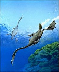 """Hesperornis (meaning """"western bird"""") is a genus of flightless aquatic birds that spanned the first half of the Campanian age of the Late Cretaceous period (83.5–78 mya)."""