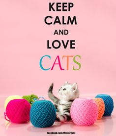 Keep Calm and Love Cats ~ Cats are adorable ♥