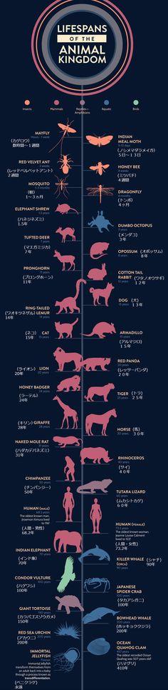 知れば驚く動物たちの寿命!それぞれの寿命を見てみよう!