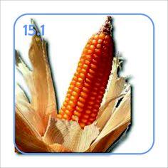 15.1 Biocarburanti - Coltivare il terreno per nutrire macchine non ha senso, soprattutto quando la conseguenza è un aumento del costo del cibo.