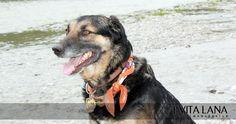 Reflektor-Hundetuch mit Blumenmuster. Stört selbst beim intensivsten Buddeln nicht!