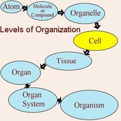 Printables Levels Of Organization Biology Worksheet we the ojays and anchor charts on pinterest all living things have different levels of organisation in chart see how living