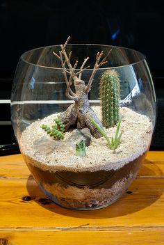Succulent Terrarium | Flickr - Photo Sharing!